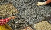 Swiss agency to help Kerala varsity in Organic Shrimp farming