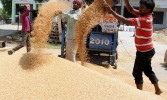 Centre hikes Minimum Support Price for pulses