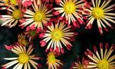Demonetisation: A flower farmer's story